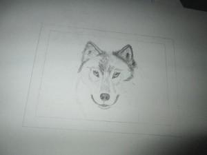 Wolf in Arbeit